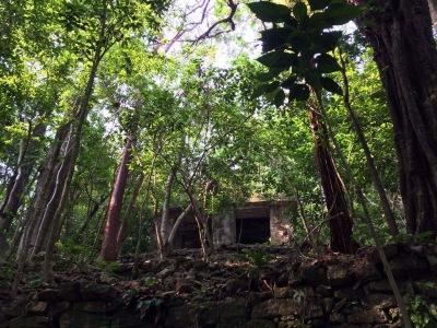 Palenque exploring